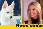 Liberals Attack Ivanka Trump for Choosing a White Dog